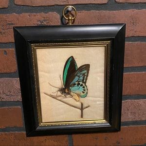 Taxidermy Butterfly 🦋